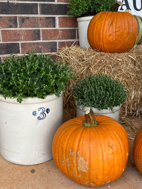 fall mums in crocks